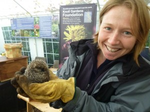 DWT's Katie Wilkinson with rescued hedgehog at Knoll Gardens