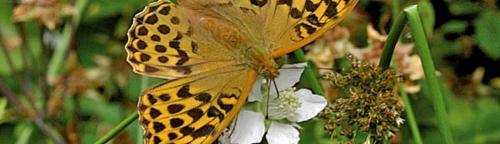 2017 Annual Butterflies, Dragonflies and Damselflies Report