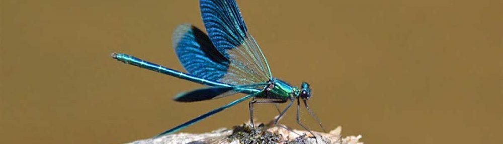 2016 Annual Butterflies, Dragonflies and Damselflies Report