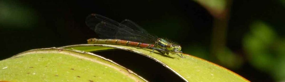 2011 Annual Butterflies, Dragonflies and Damselflies Report
