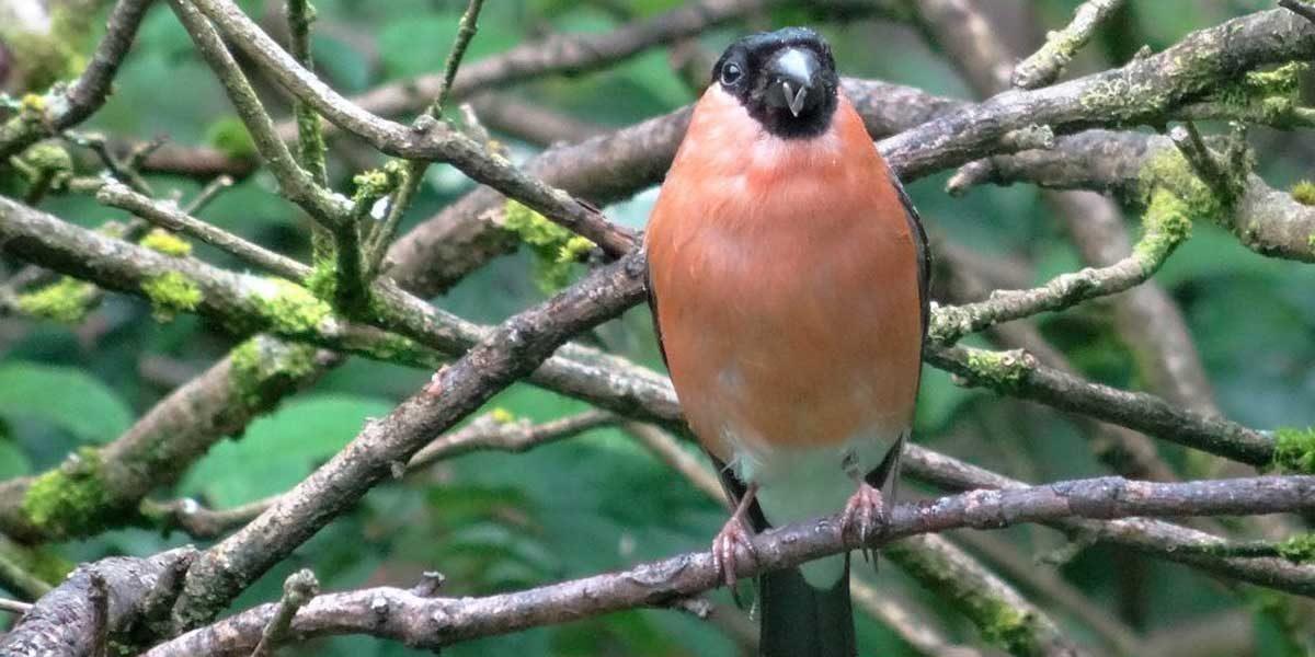 2016 Knoll Gardens – Garden Birdwatch
