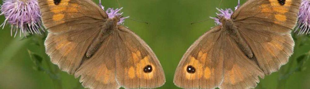 2010 Annual Butterflies, Dragonflies and Damselflies Report