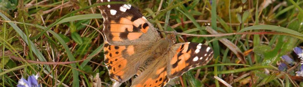 2009 Annual Butterflies, Dragonflies and Damselflies Report