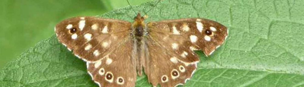 2012 Annual Butterflies, Dragonflies and Damselflies Report